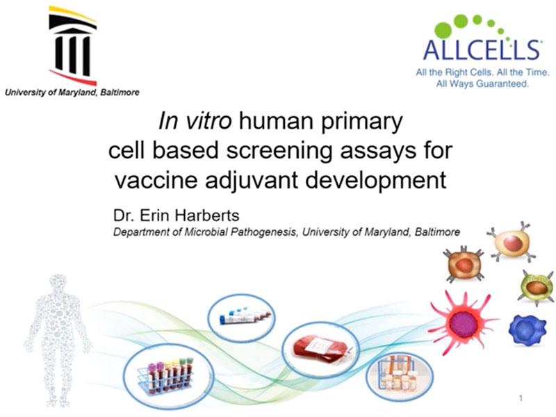 In vitro human primary cell based screening assays for vaccine adjuvant development